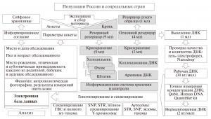 Схема организации Биобанка народонаселения Северной Евразии.